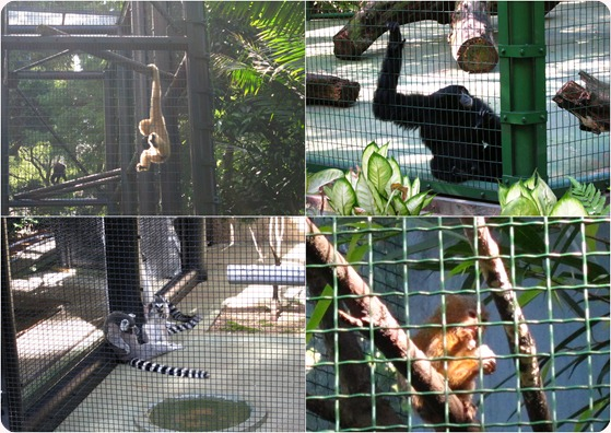 HK-Zoological-juin-2010